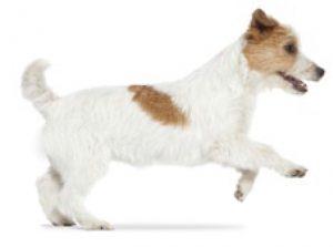 trotdog